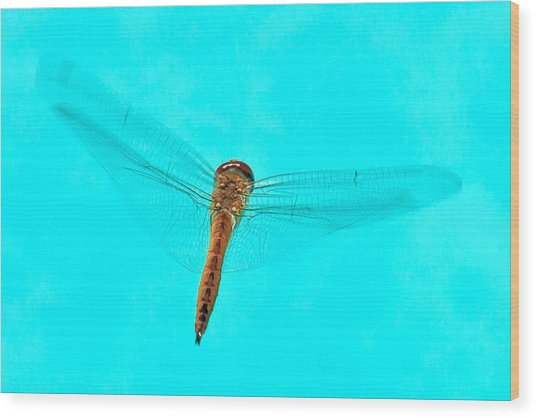 Dragonfly Wood Print by Miguel Capelo