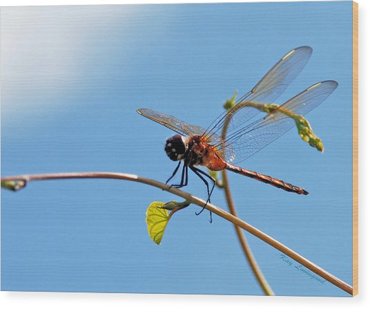 Dragonfly On A Vine Wood Print
