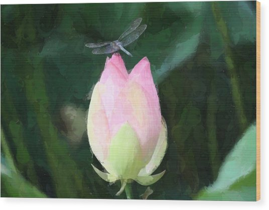 Dragonfly On Water Lily Wood Print
