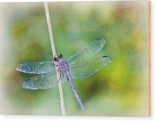 Dragonfly Respite 001 Wood Print by Barry Jones