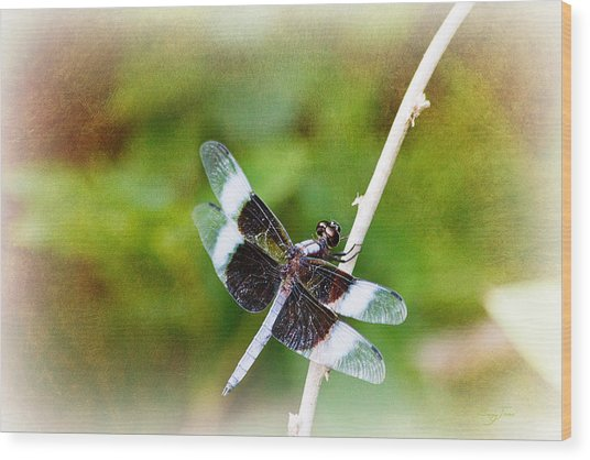 Dragonfly Respite 002 Wood Print by Barry Jones
