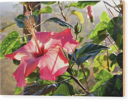 Drama In The Hibiscus World Wood Print