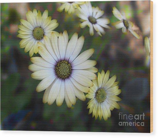 Dream Daisy Wood Print