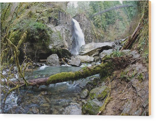Drift Creek Falls Wood Print