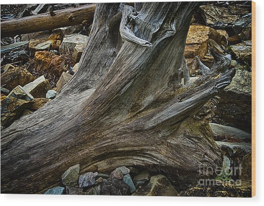 Drift Wood One Wood Print by Rick Bragan