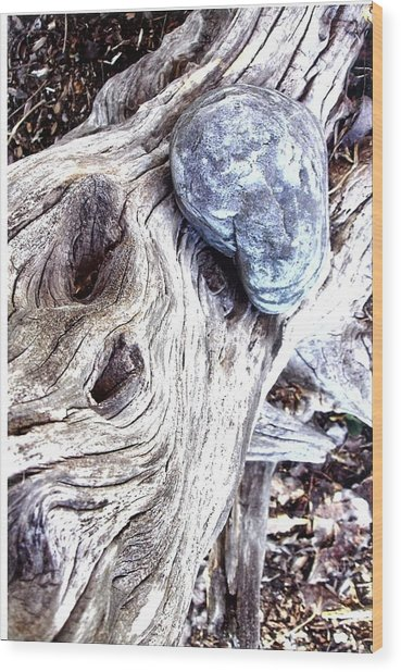 Driftwood Wood Print by Suzanne Fenster
