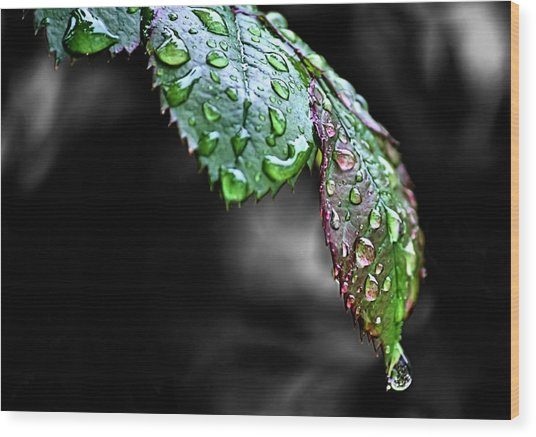 Dripping Wet Wood Print by Karen Scovill