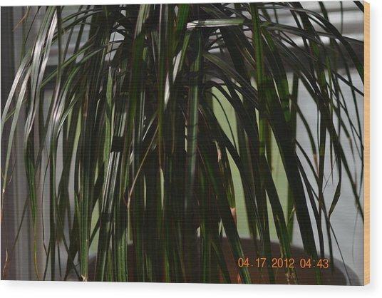 Drooping Tree Leaves Wood Print by Heidi Frye