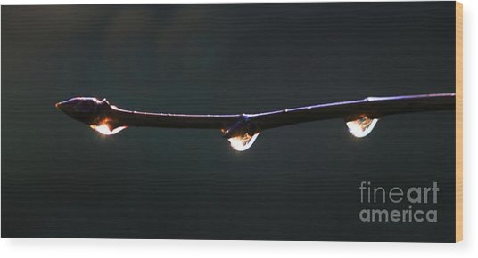 Drops Of Sunrise Wood Print by Erica Hanel