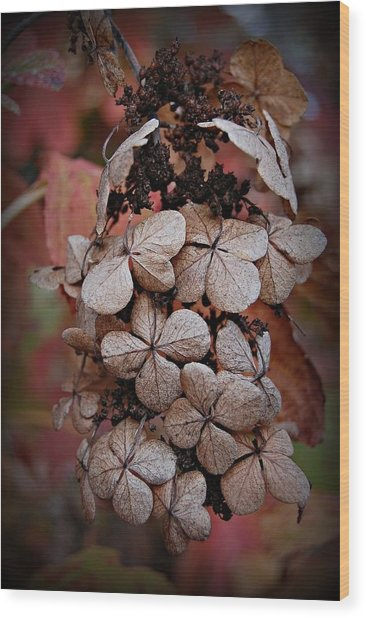 Dry Bloom Wood Print by Beverly Hammond
