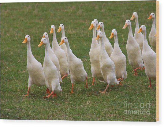 Duck March Wood Print
