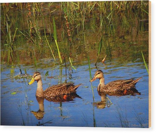 Ducks Afloat Wood Print