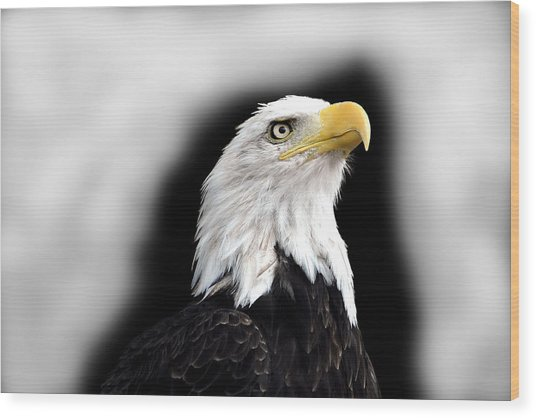 Eagle Wood Print by Barry Shaffer