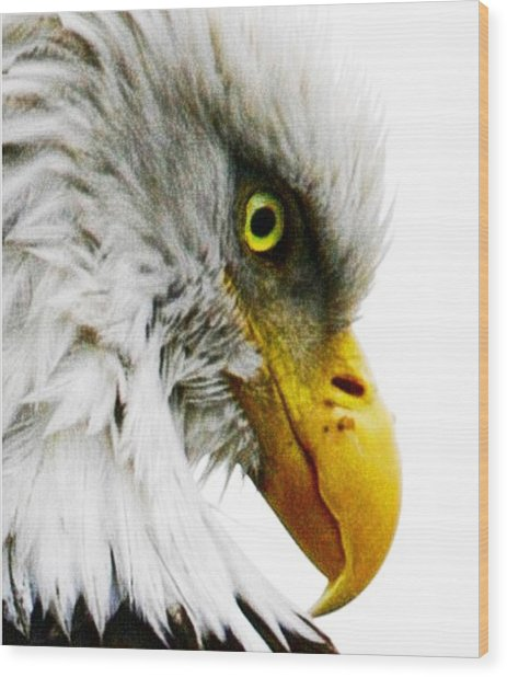 Eagle Eye Wood Print by Carrie OBrien Sibley