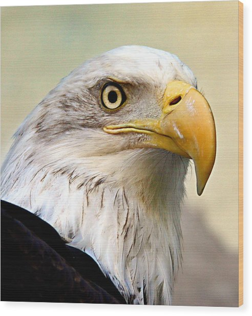 Eagle Portrait Wood Print