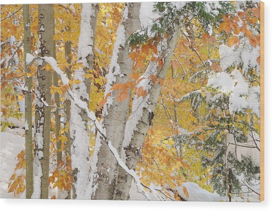 Early Snowfall Wood Print