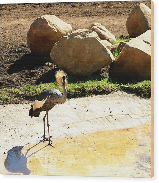 East African Crowned Crane Wood Print