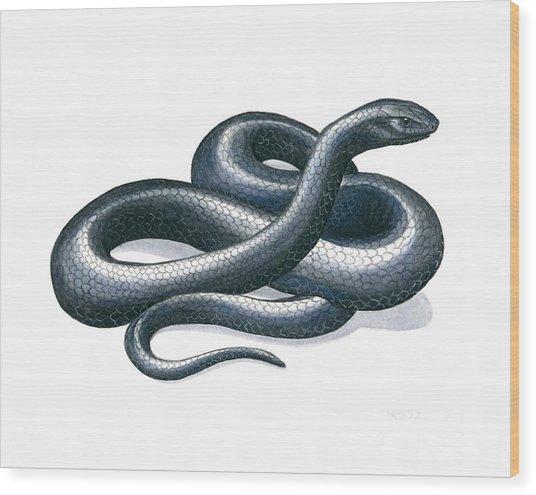 Eastern Indigo Snake Wood Print by Anna Bronwyn Foley