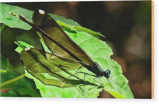 Ebony Jewelwing Damselfly Wood Print by Bruce W Krucke