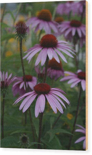 Echinatia Wood Print by Margaret Steinmeyer