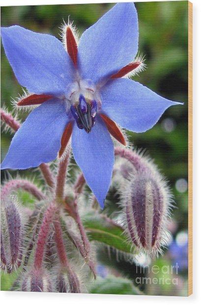Edible Flower Photography Wood Print