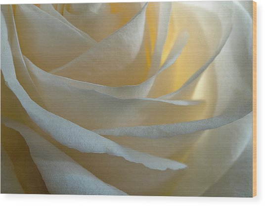 Egg White Wood Print