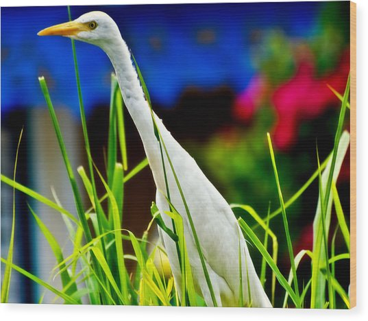 Egret In Grass Wood Print