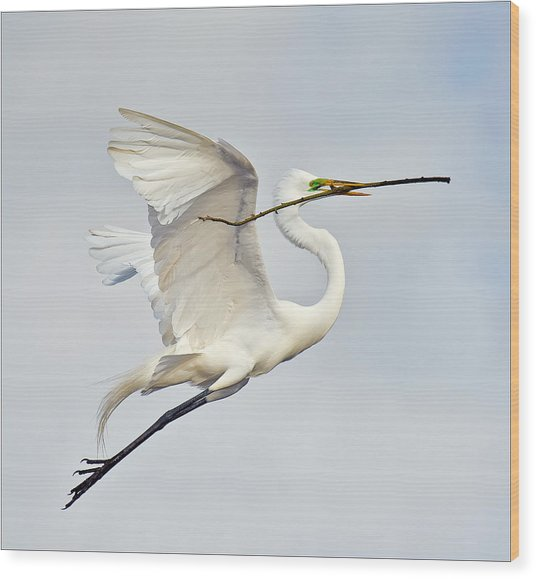 Egret With Nesting Material Wood Print by Howard Knauer