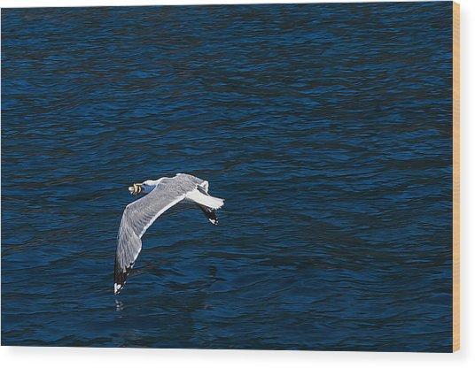 Elba Island - Flying For Food - Ph Enrico Pelos Wood Print