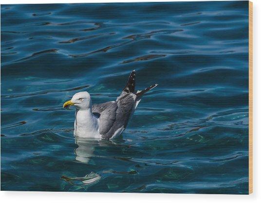 Elba Island - Solitary Bird - Ph Enrico Pelos Wood Print