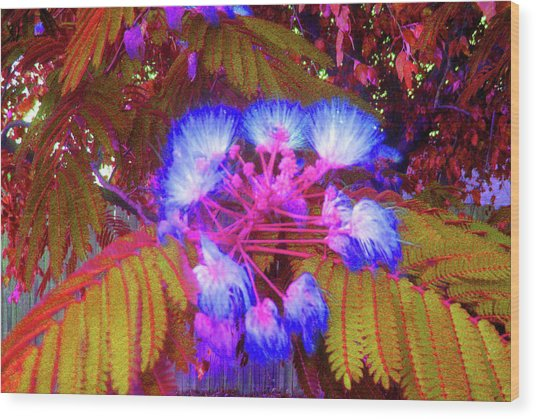Electric Mimosa Wood Print by Juliana  Blessington