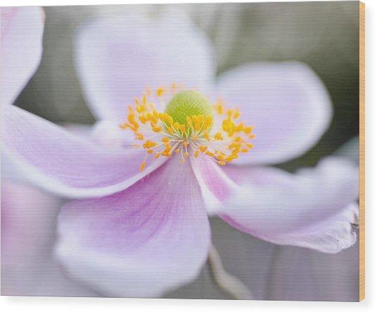 Elegant Anemone Wood Print