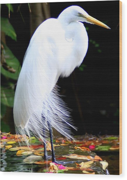 Elegant Egret At Water's Edge Wood Print