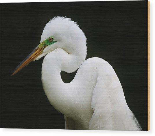 Elegant Great White Egret Wood Print by Paulette Thomas