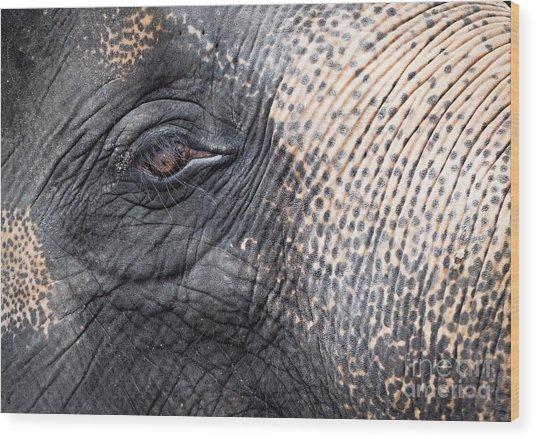 Elephant Close-up Portrait Wood Print by Johan Larson