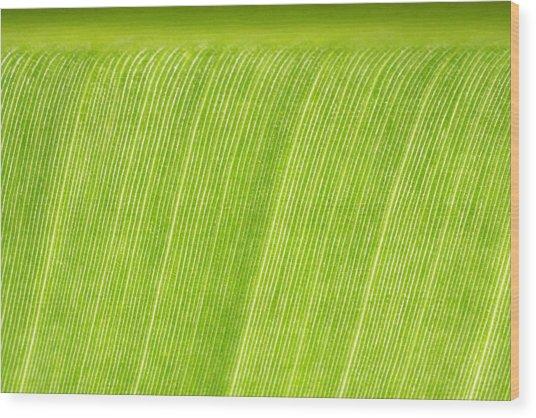 Elephant Ear Leaf 2 Wood Print by Will Czarnik