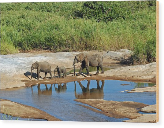 Elephant Reflections And The Sand River Wood Print
