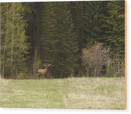 Elk Wood Print by Larry Roberson