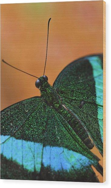 Emerald Swallowtail Wood Print