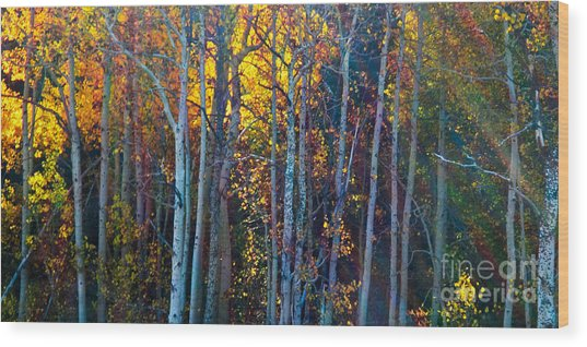 Enchanted Aspen Wood Print