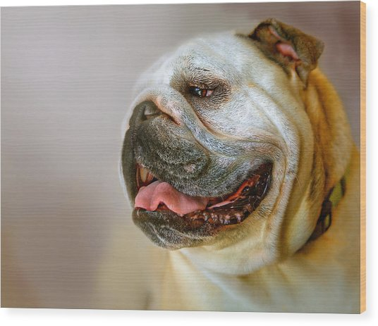 English Bulldog Willie In Profile Wood Print by Dorothy Walker