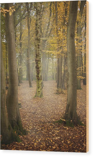 English Forest In Autumn Wood Print