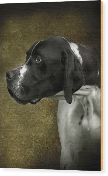 English Pointer Dog Portrait Wood Print