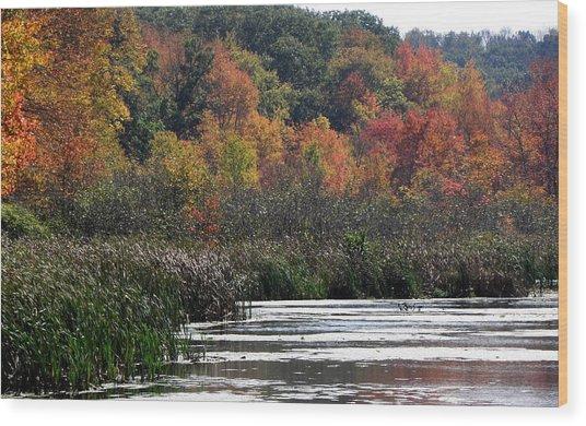 Even Swamps Have Beauty Wood Print by Kim Galluzzo Wozniak
