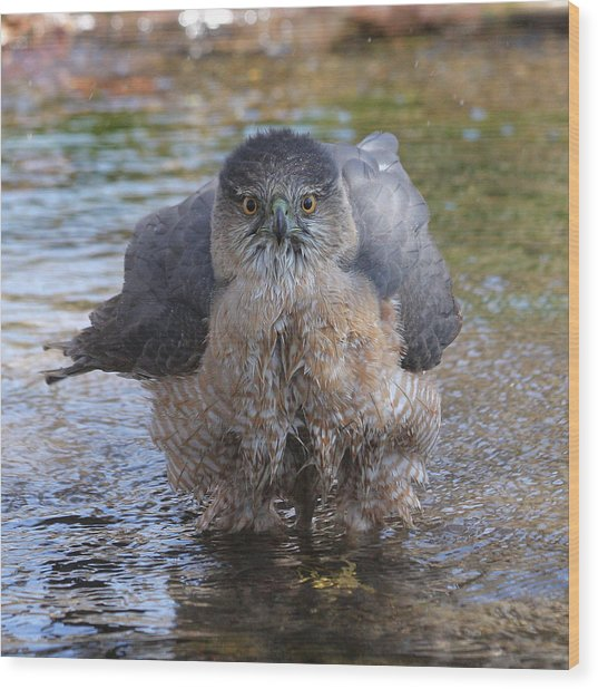 Excuse Me But I Am Bathing Here. Wood Print