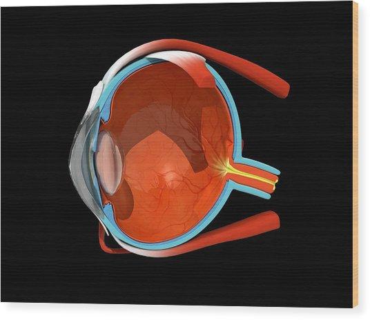 Eye Anatomy Wood Print by Jose Antonio PeÑas