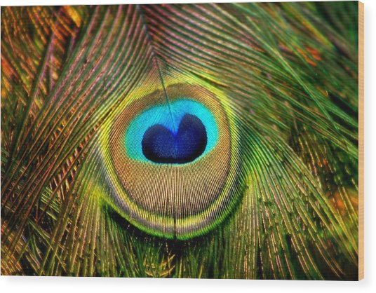 Eye Of The Peacock Feather Wood Print