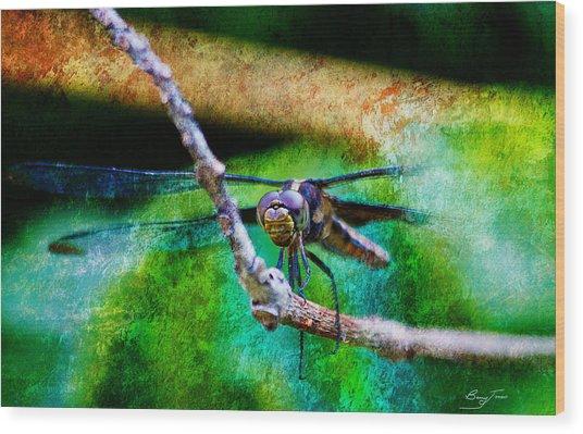 Eye To Eye Wood Print by Barry Jones