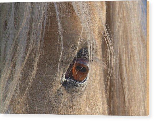 Eyes Of Beauty.. Wood Print by Al  Swasey
