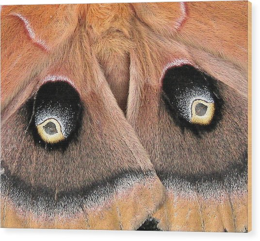 Eyes Of Deception Wood Print